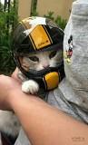 Мотошлем для кошек и собак